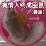 有情人终成圈鼠(眷属)
