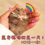 鼠年祝你独鼠一只