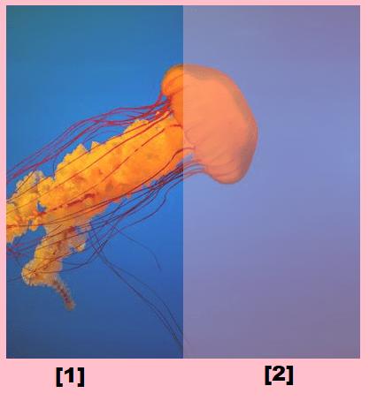 使用 CSS 遮罩和自定义属性实现图像碎片效果